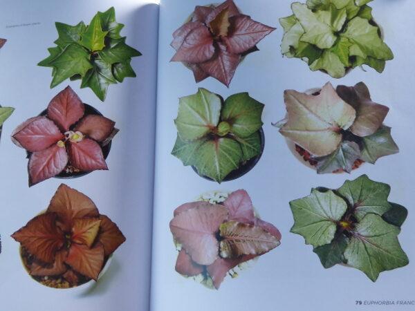 Euphorbia francoisii varianter